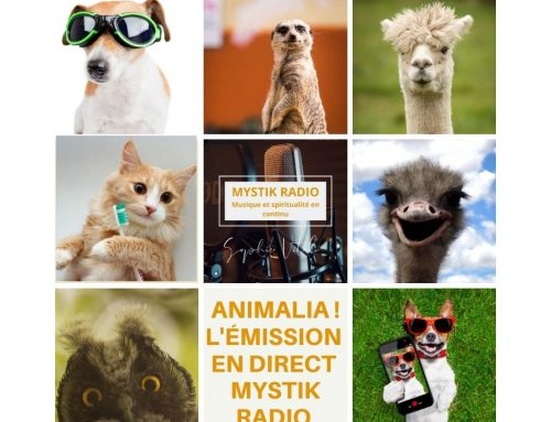 Animalia ! L'émission ! en direct sur Mystik Radio 18/11/2020